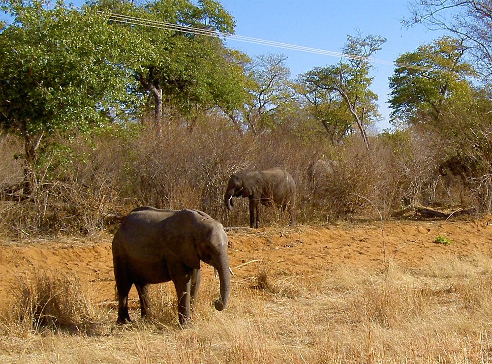 troupeau d'elephant