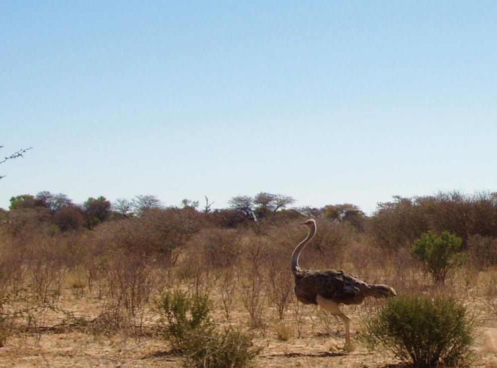 paysage botswanais