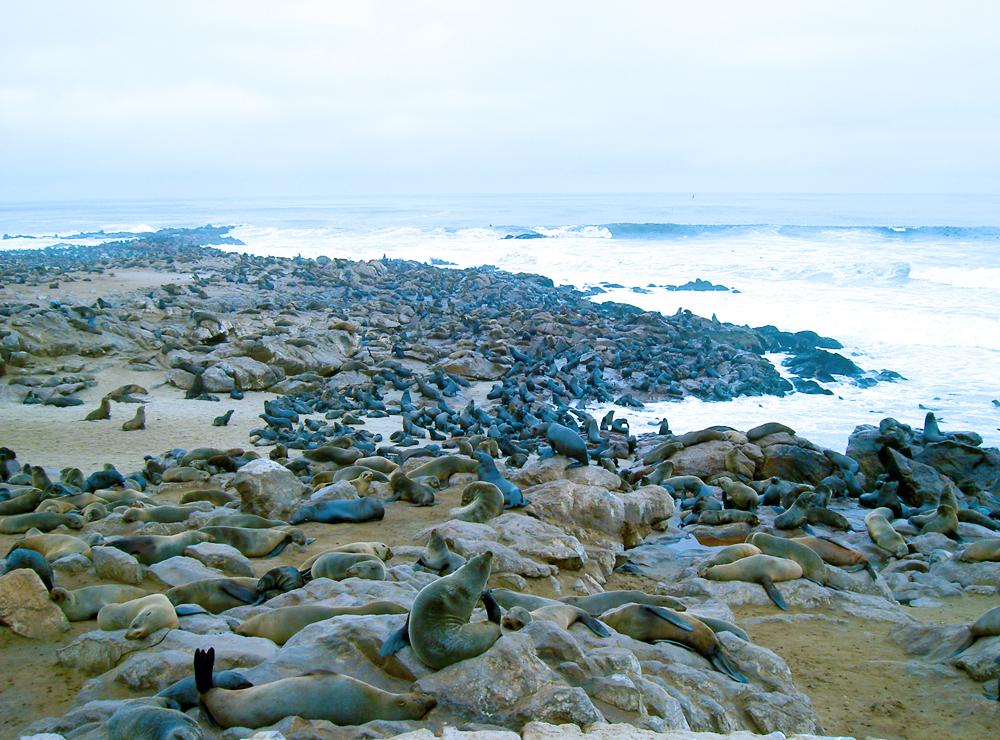 namibia's scenery