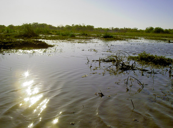 Salambala Conservancy