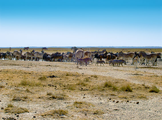 animals in Etosha