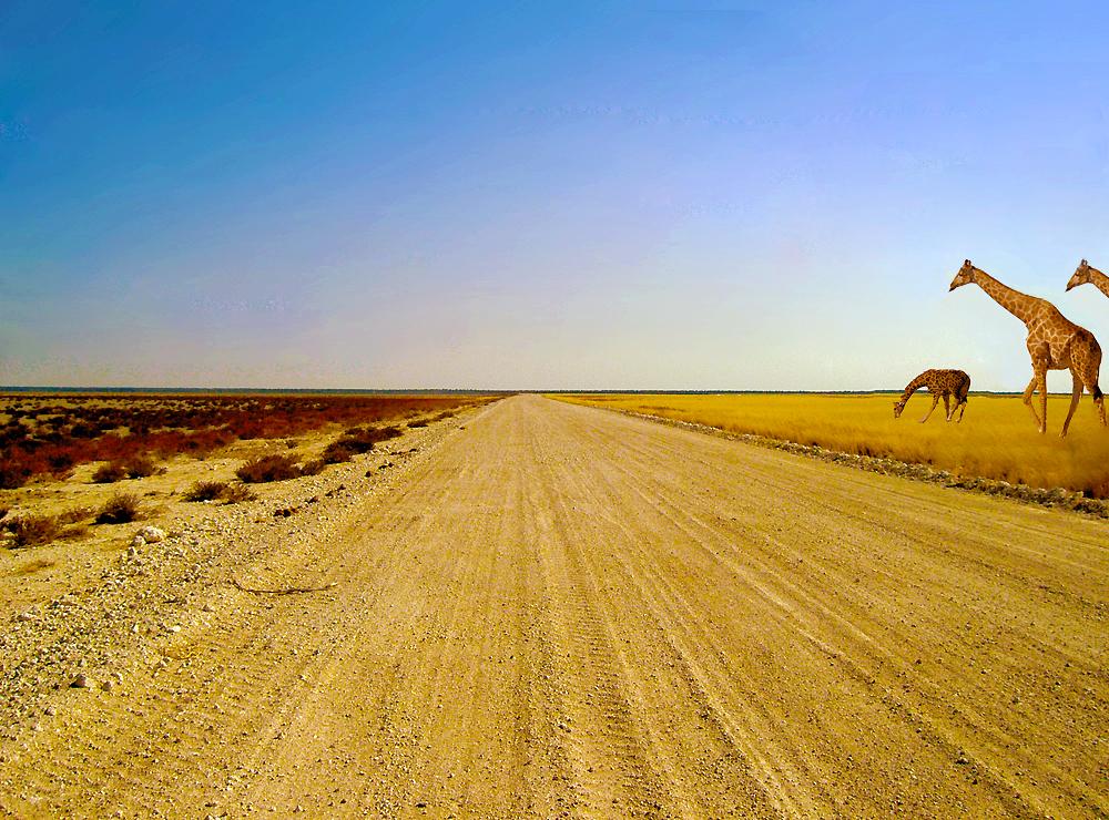 etosha road