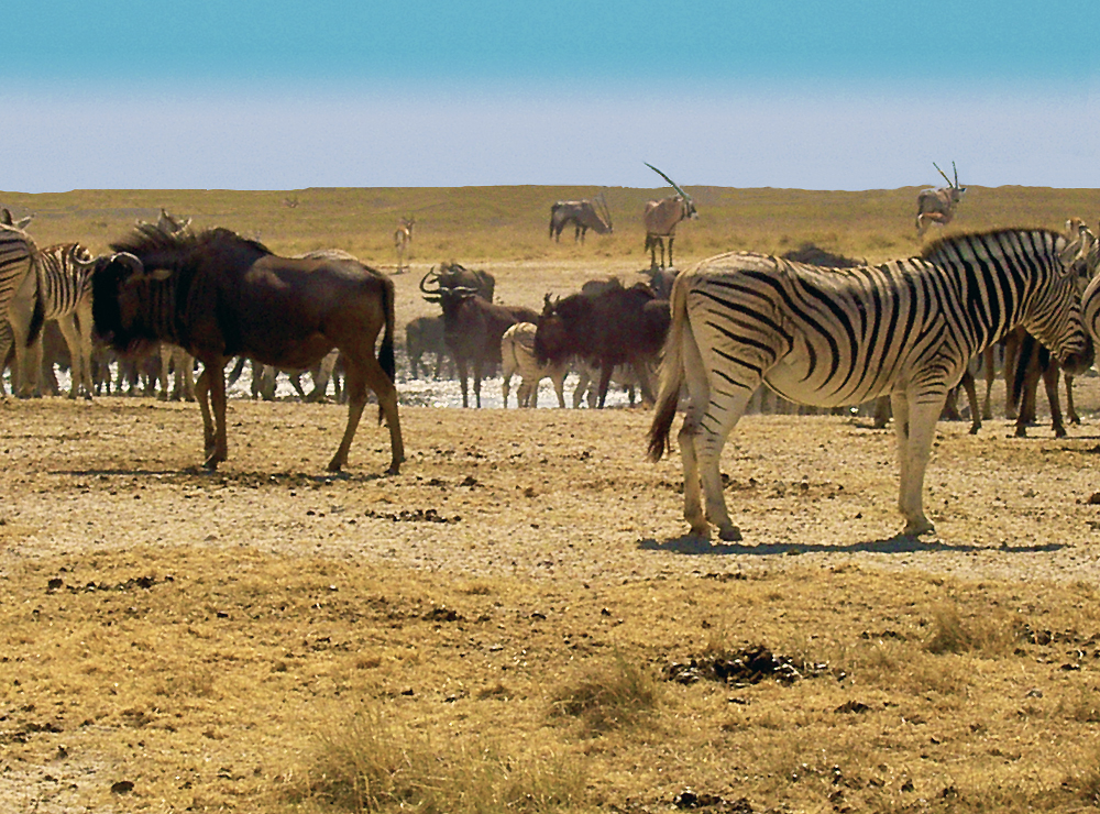 Etosha Namibia  city pictures gallery : Etosha Namibia Pictures to pin on Pinterest