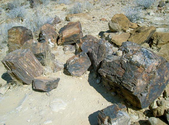 petrified forest, Namibia