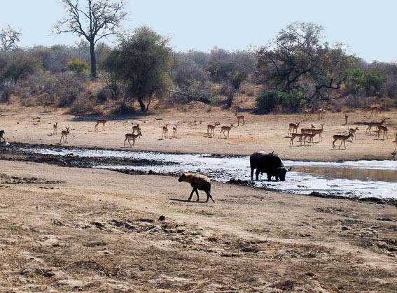 animals in kruger national park