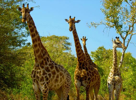 kruger park africa