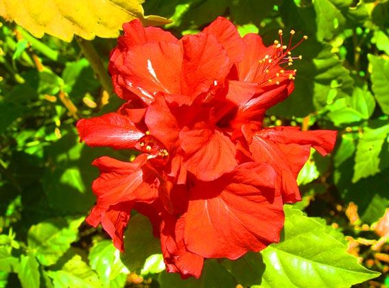 flower at magoebaskloof