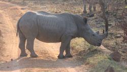 Borakalalo Game Reserve