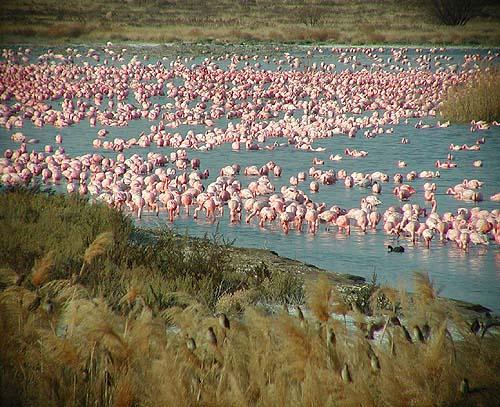 Faan Meintjies Nature Reserve