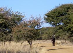 SA Lombard Nature Reserve